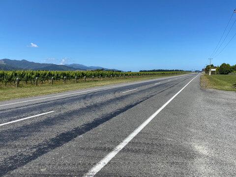 Roadside vineyards in the Marlborough, New Zealand
