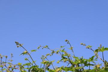 파란 하늘과 식물 Fotobehang