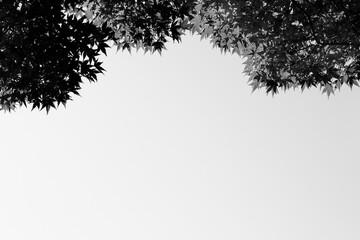 하늘과 나무 Fotobehang