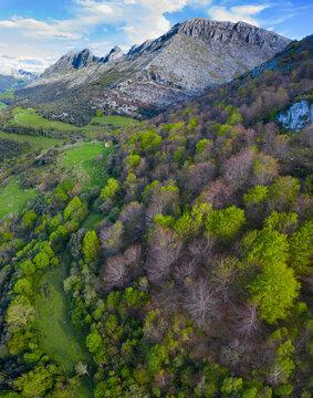 Beech forest in springtime, Sierra de Hornijo, Alto Ason, Soba Valley, Cantabria, Spain, Europe