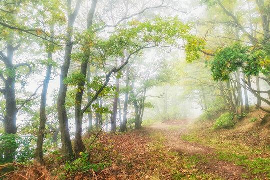 Oktober auf dem Mosel-Höhenweg bei Bernkastel-Kues