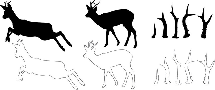 silhouette and outline of Roe deer (Capreolus capreolus), vector on white background