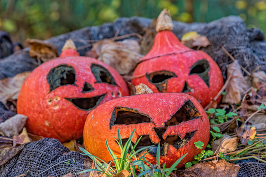 Large orange pumpkins with carved faces. Pumpkins with halloween decorations