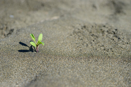 Small plant growing from dry sand desert