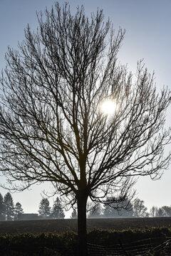 arbre bois soleil lumiere