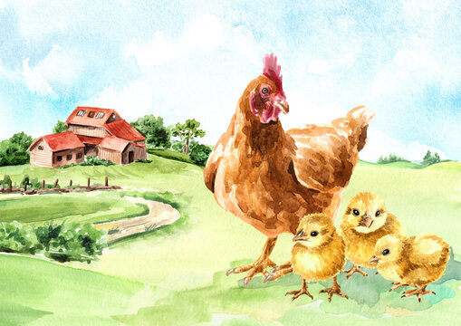 Organic farm products. Hen with ckicks on the background of a farm in the countryside. Hand drawn watercolor illustration