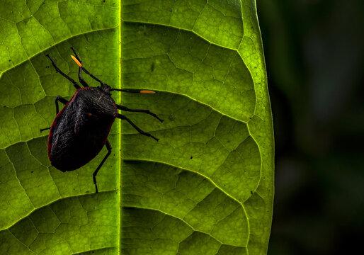 Black bug in Ecuador