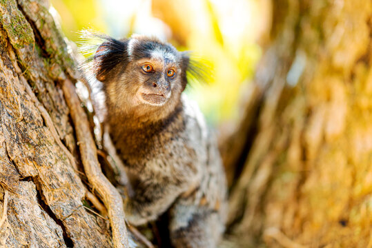 Detail of marmoset monkey on the tree. selective focus.