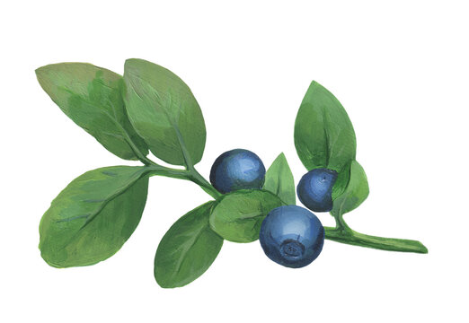 Blueberry Branch in Acrylic