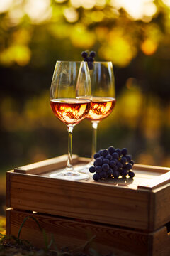Two glasses of rose wine in the vineyard