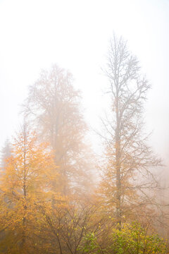 Trees in the forest in fog in autumn
