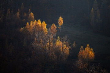 Autumn colors and amazing sunrise light in the mountain forest