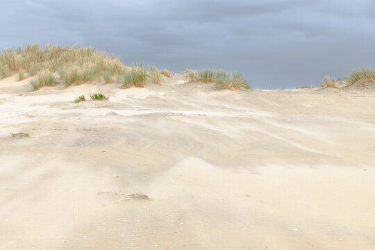 Sand blowing over the beach forming dunes during a storm at the dutch coast