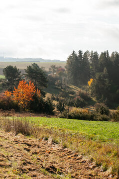 an hilly autumn landscape in morning sunlight