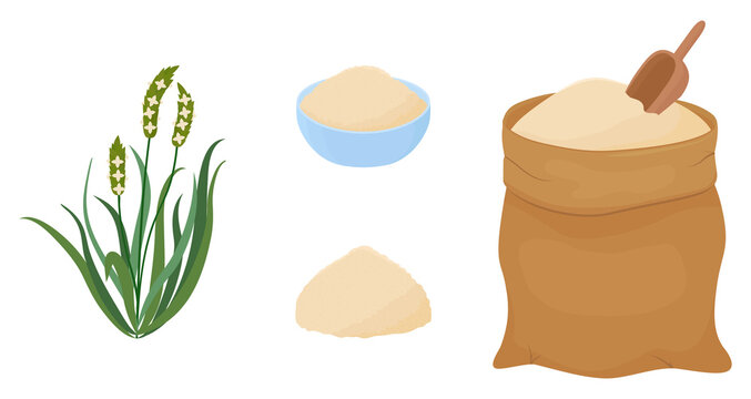 Psyllium cartoon grass and powder. Keto flour vector illustration. Organic healthy diet food. Isolated objects on white background.