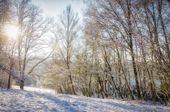 Schneelandschaft Laubbäume im Winter mit Schnee im Gegenlicht