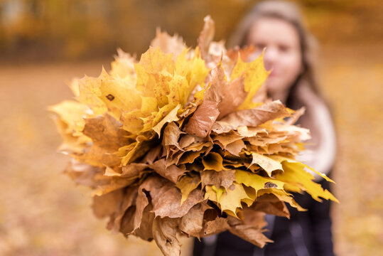 Girl with Blurry Face Holds Autumn Leaves. Blurry Background.