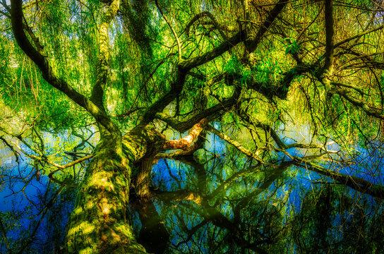 Spiegelung Baumstamm im Wasser eines sees HDR