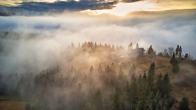 Forest covered by low clouds. Misty fall woodland. Picturesque resort Carpathians range. November morning.