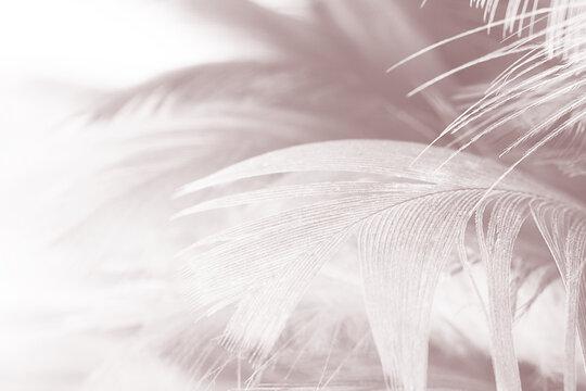Full Frame Shot Of White Feathers
