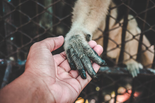 Close-up Of Monkey Holding Hand Of Man At Zoo