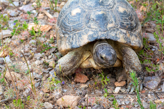 A turtle wanders the grounds