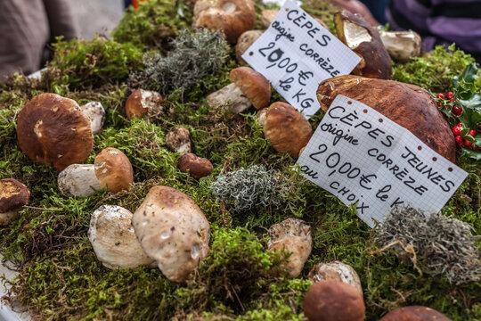 Brive la Gaillarde (Corrèze, France) - Scène de marché à la halle Georges Brassens - Cèpes