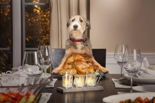 Dog Serving Thanksgiving Day Turkey