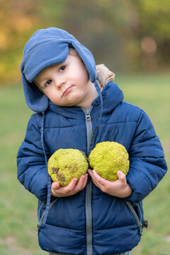 Portrait of a boy in the woods with a beautiful bokeh. Happy child boy with hat and winter jacket is posing on an autumn day. Boy with Breadfruit (Artocarpus altilis) in hands.