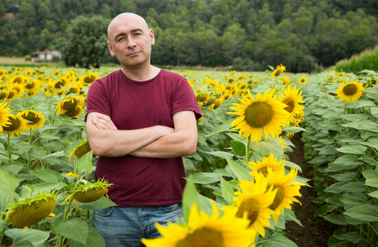 Portrait of middle-aged man posing in sunflowers field at summer day