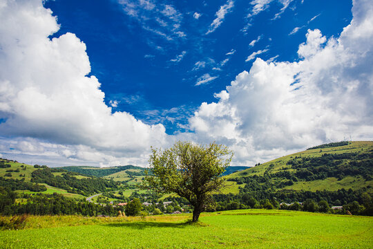 One lonely tree growing in the meadow between mountains