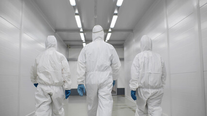 Fototapeta Back view of three disinfectors or doctors walk in protective uniform walking in hospital corridor