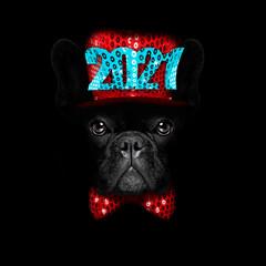 christmasn santa claus  dog on black backgroud