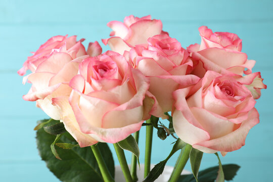 Beautiful pink roses on light blue background, closeup