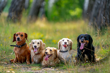 Wall Murals Dog Young dogs are posing. Cute doggies or pets are looking happy on nature background.