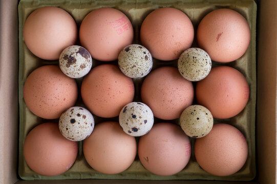 Eggs brown and small