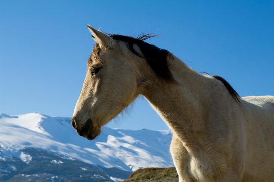 Spain, Andalucia, Sierra Nevada, horse