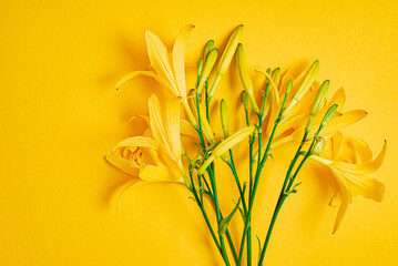 day-lily on the yellow background