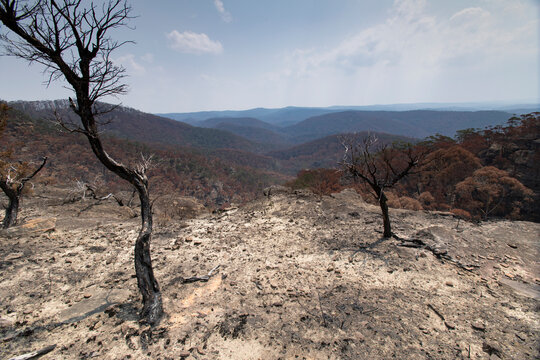 After the bushfire in Blue mountains, Mount Govetts, Australia.