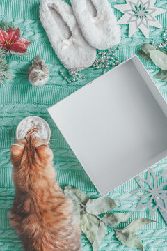 Winter and Christmas lifestyle.  Empty white box on light blue knitted blanket with ginger cat,  cup of cappuccino , cozy slippers and snowflakes . Top view