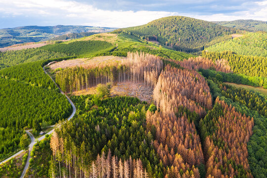 green forest hills with bark beetle dead needle trees from above