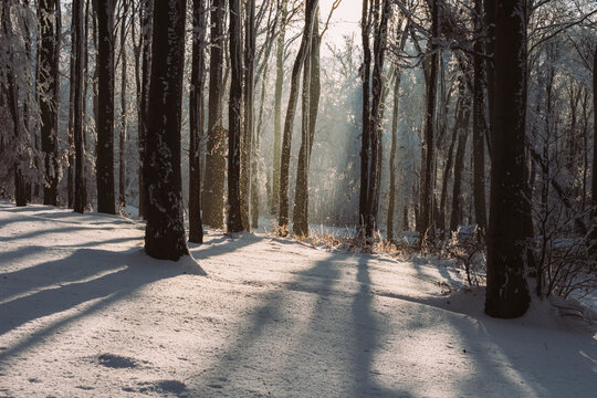 Sun setting in frozen forest with snow