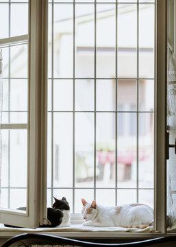Two adult cats enjoying fresh air on open window's windowsill