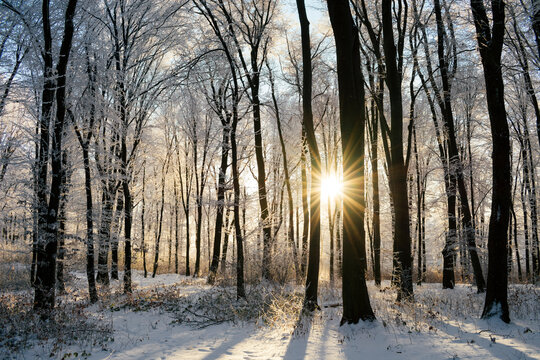 Sun setting in enchanted winter forest