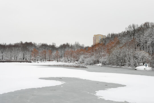 A frozen forest after a snowfall in winter on an iced pond. A yellow tall building on the background