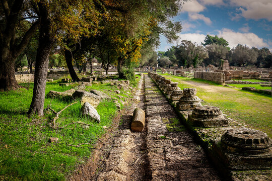 Looking down a long row of broken off bases of ancient  classical columns and remains of buildings nearby with olive trees and touists in the distance at site of original Olypmics in Greece