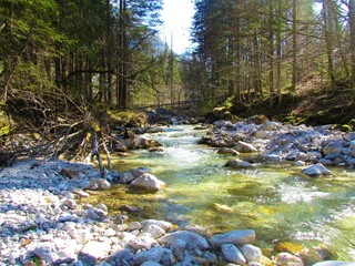 Krnica river flowing through a forest