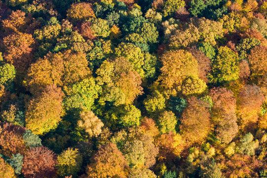Sachsenwald, Herbstwald aus der Luft, Luftbild des  Blätterdach