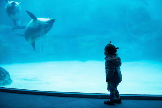 Little girl watch sea dolphins in Nagoya aquarium
