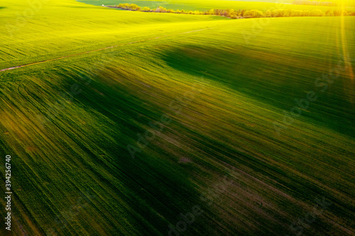Wall mural Aerial photography of green wavy field with shadows from sunlight in the evening.